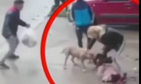 Αργεντινή - Άγρια επίθεση πίτμπουλ σε 7χρονη (vid)