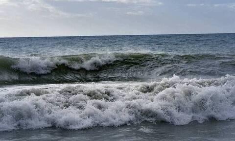 Απόκοσμo θέαμα στη Ρωσία: Παραλία γέμισε με νεκρά θαλάσσια πλάσματα (vid)