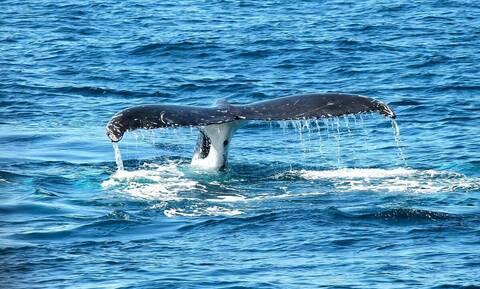 Κάνουν κανό και εμφανίζεται τεράστια φάλαινα - Απίστευτο αυτό που έγινε (vid)