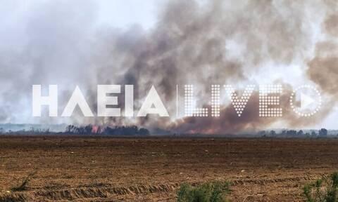 Φωτιά ΤΩΡΑ στη Μανωλάδα - Συναγερμός στην Πυροσβεστική