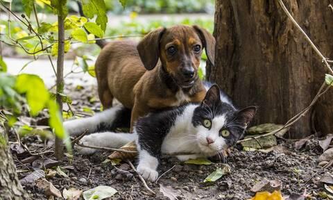 Κορονοϊός:  Οι γάτες μεταδίδουν μεταξύ τους τον ιό, ενώ οι σκύλοι όχι
