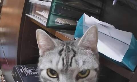 Γάτα κοιτά αγριεμένη κάμερα ασφαλείας - Αυτός είναι ο απίστευτος λόγος (vid)
