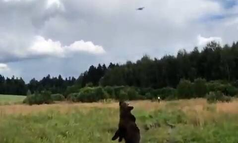 Παιχνιδιάρα αρκούδα θέλει να αρπάξει ένα drone (vid)