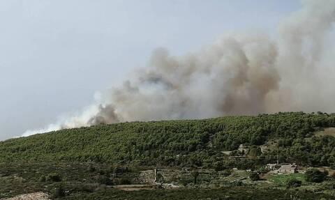 Φωτιά Ζάκυνθος: Στάχτη χιλιάδες στρέμματα - Τεράστια οικολογική καταστροφή