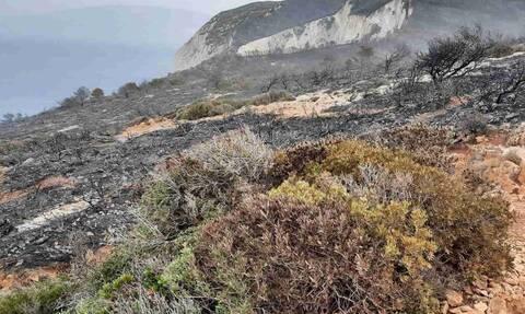 Φωτιά Ζάκυνθος: Κρανίου τόπος η περιοχή πάνω από το «Ναυαγίου» - Συγκλονιστικές εικόνες (pics - vid)
