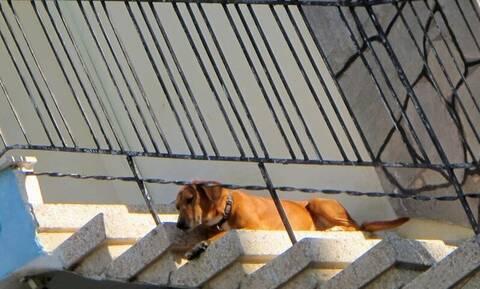 Κτηνωδία στα Χανιά: Έκοψε τους όρχεις σκύλου και τον κρέμασε