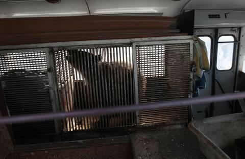 Ρωσία: Επίθεση αρκούδας σε υπάλληλο τσίρκου, κατέληξε στο νοσοκομείο!
