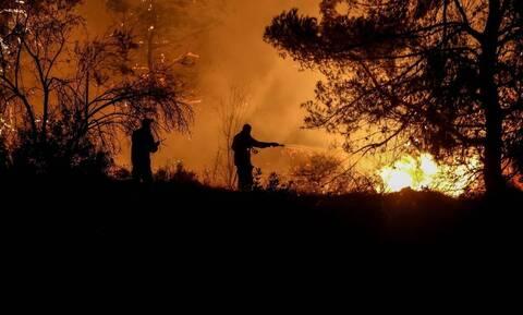 Φωτιά ΤΩΡΑ στη Μεσσηνία: Στις φλόγες το δάσος στη Χρυσοκελλαριά