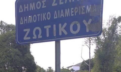 Φρίκη στα Ιωάννινα: Κρέμασαν αλεπού σε πινακίδα (Σκληρές Εικόνες)