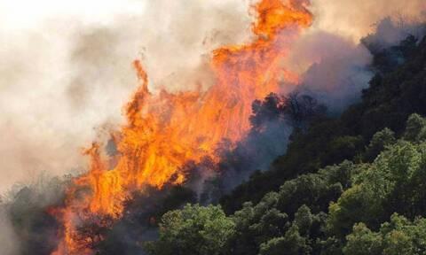 Φωτιά ΤΩΡΑ σε δασική έκταση στον Παγώντα Ευβοίας