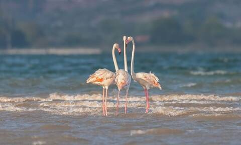 Ένας ροζ παράδεισος στη Φθιώτιδα - Εντυπωσιακές εικόνες!