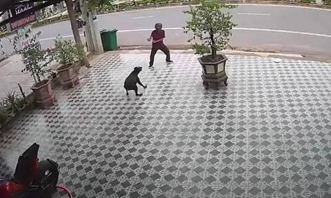 Μεθυσμένος δέχθηκε επίθεση από σκυλιά - Έτσι τα σταμάτησε (vid)