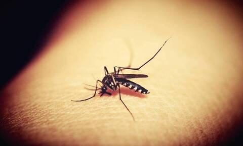 Απίστευτες εικόνες: Τον τσίμπησε κουνούπι στο πόδι πριν 20 χρόνια - Δείτε πώς είναι σήμερα