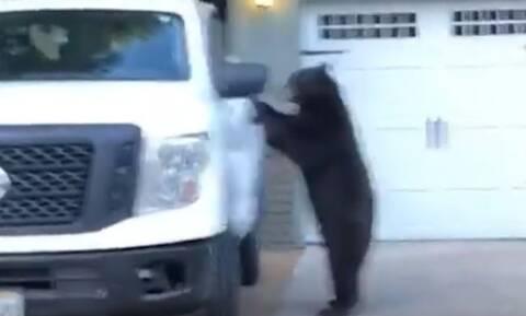 Έπος: Αρκούδα… κλέβει αυτοκίνητο - Έκατσε... κυρία στη θέση του οδηγού! (pics+vids)