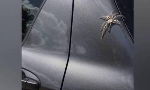 Τεράστια αράχνη πήγε να μπει στο αμάξι της - Δείτε τι την «έσωσε» (video)