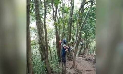 Τους πήρε αγριογούρουνο στο κυνήγι! Σκαρφάλωσαν στα δέντρα για να σωθούν (vid)