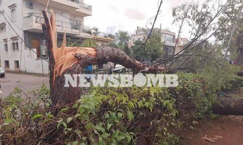 Κακοκαιρία: Απίστευτες εικόνες στο Νέο Ηράκλειο – Έπεσαν δέντρα, καταστράφηκαν οχήματα