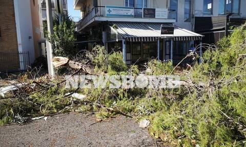 Ρεπορτάζ Newsbomb.gr: Eικόνες χάους στο Νέο Ηράκλειο – Έπεσαν δέντρα, καταστράφηκαν περιουσίες