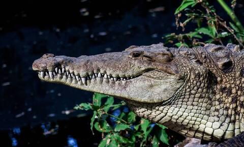 Νόμιζε πως ο κροκόδειλος κρυβόταν σε φύκια - Τρελάθηκε όταν είδε τι ήταν (pic)
