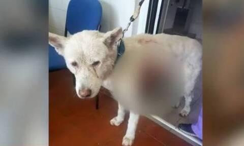 Κτηνωδία στη Νίκαια: Δύο συλλήψεις για την άγρια κακοποίηση του σκύλου