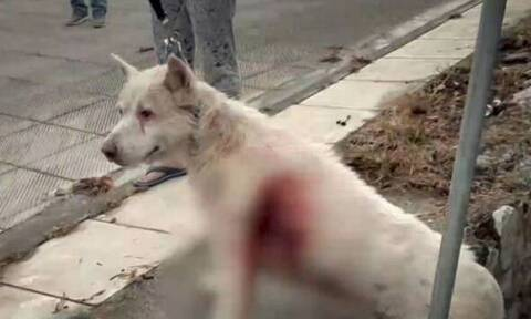 Νίκαια: Αμετανόητος ο 54χρονος που μαχαίρωσε τον σκύλο - Τι ισχυρίζεται