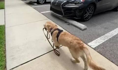Ο σκύλος πιάνει το λουρί και η συνέχεια είναι σκέτη απόλαυση!