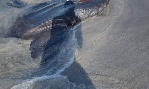 Έπαθαν πλάκα στη Μήλο: Το απόκοσμο ψάρι που ξεβράστηκε στην ακτή