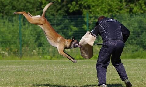 Επιθέσεις σκύλων: Άλλο φιλόζωος και άλλο φιλο - ανεύθυνος ζωόφιλος