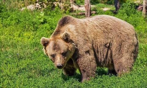 Αρκούδα κατασπάραξε εργαζόμενο ζωολογικού κήπου (vid)