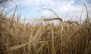ΟΠΕΚΕΠΕ: Αυτή είναι η τελική ημερομηνία της πληρωμής για τις αγροτικές επιδοτήσεις