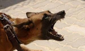 Αγέλη σκύλων κατασπάραξε μητέρα 4 παιδιών