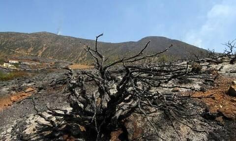 Κρήτη: Τραγικός θάνατος ηλικιωμένου - Τον εντόπισαν απανθρακωμένο σε χωράφι