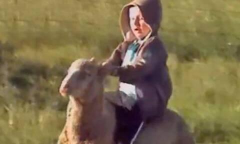Πιτσιρικάς καβαλάει πρόβατο και η συνέχεια είναι ξεκαρδιστική (video)