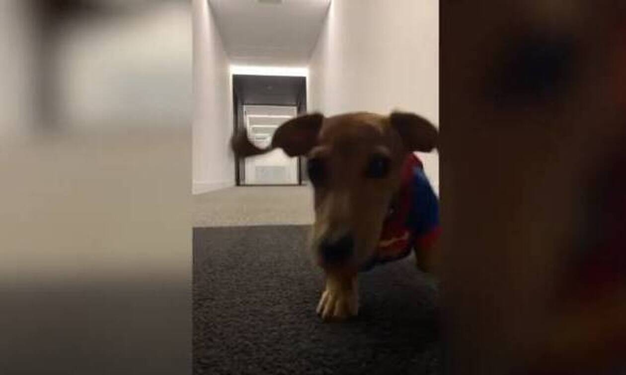 Αξιολάτρευτος σκύλος... Σούπερμαν τρέχει σαν αστραπή! (video)