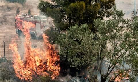 Φωτιά ΤΩΡΑ στη Θήβα - Συναγερμός στην Πυροσβεστική