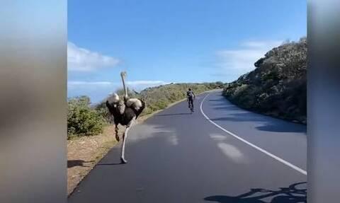 Στρουθοκάμηλος vs ποδηλάτες: Δείτε ποιος νίκησε! (video)