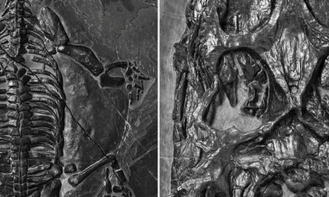 Δέος: Επιστήμονες ανακάλυψαν τρομακτικό θαλάσσιο ερπετό που ζούσε πριν 240 εκατ. χρόνια (pics)