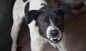 Τραγωδία: Σκύλος κατασπάραξε 3χρονο κωφάλαλο αγόρι