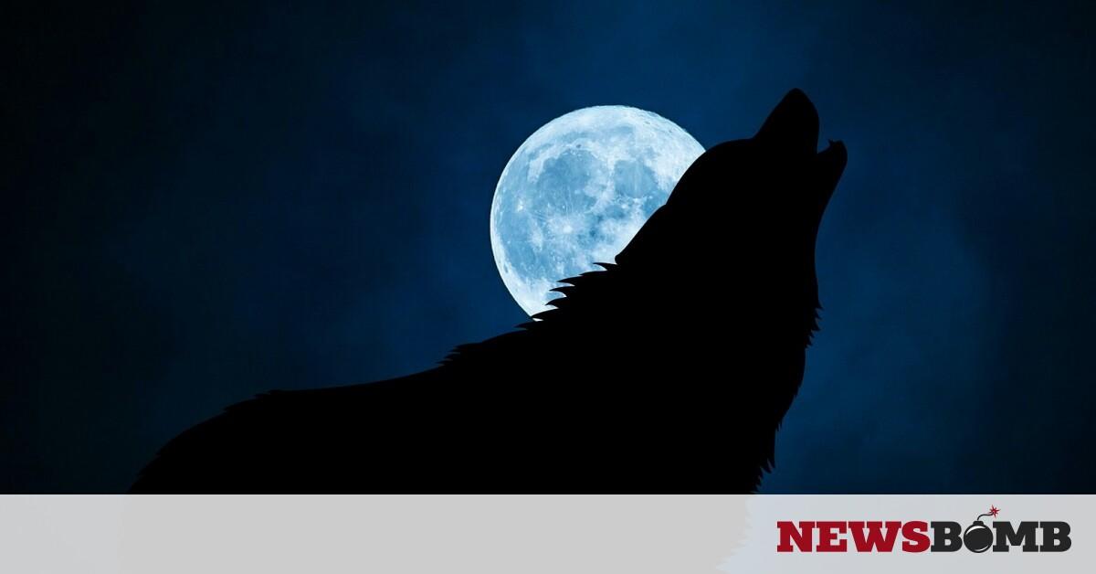 facebookwolf 3022813 1920