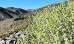 Κρητικά βότανα που βοηθούν για 7 καθημερινά προβλήματα