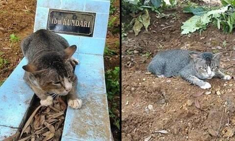Ανατριχίλα: Γάτα θρηνεί πάνω από τον τάφο του αφεντικού της!
