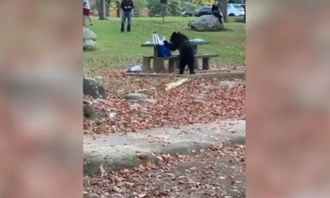 Αρκούδα «κλέφτης» πήρε το φορητό ψυγείο από πικ νικ! (video)