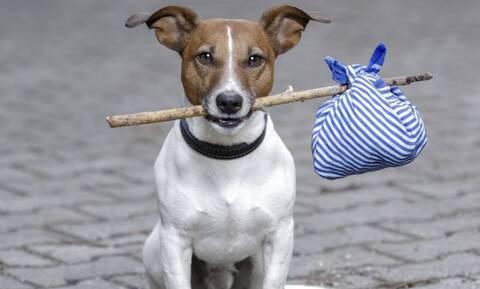 Nέα μελέτη ρίχνει περισσότερο φως στο μακρινό παρελθόν των σκύλων