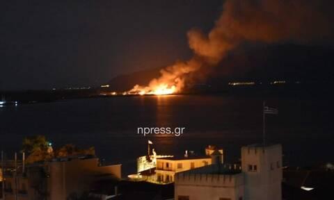Φωτιά στη Ναύπακτο - Συναγερμός στην Πυροσβεστική (vid)