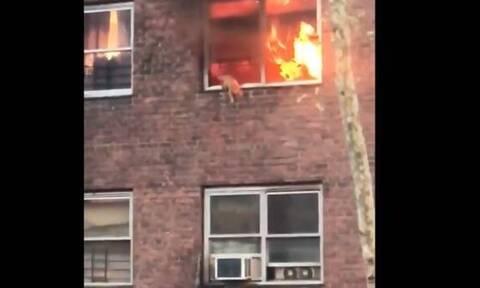 Γάτα κάνει βουτιά από φλεγόμενο κτήριο (video)