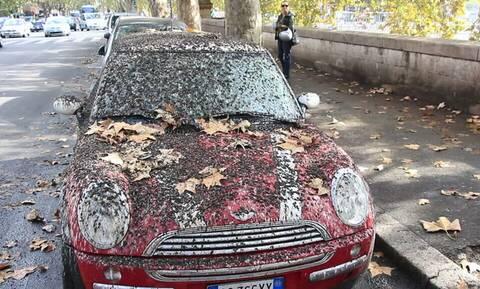 Προσοχή: Σε αυτά τα αυτοκίνητα αφήνουν κουτσουλιές τα περιστέρια!