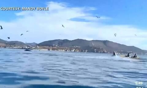 Απίστευτο βίντεο: Φάλαινα «κατάπιε» δύο γυναίκες που έκαναν καγιάκ