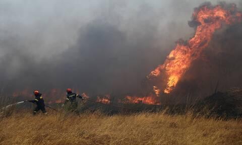 Φωτιά τώρα: Στις φλόγες δασική έκταση στην Κάρυστο - Συναγερμός στην Πυροσβεστική