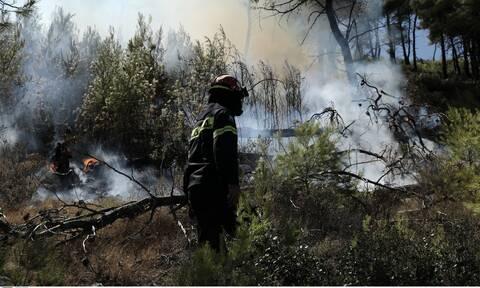 Φωτιά τώρα: Πυρκαγιά σε δασική έκταση στα Μέγαρα Αττικής