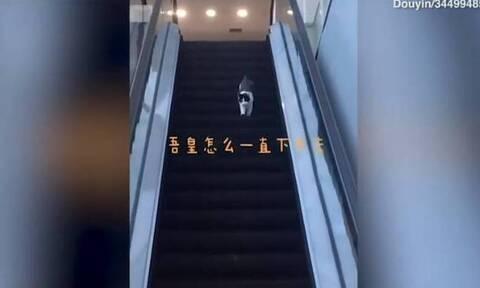 Απίθανη γάτα: Παλεύει να κατέβει τις κυλιόμενες σκάλες ανάποδα! (video)